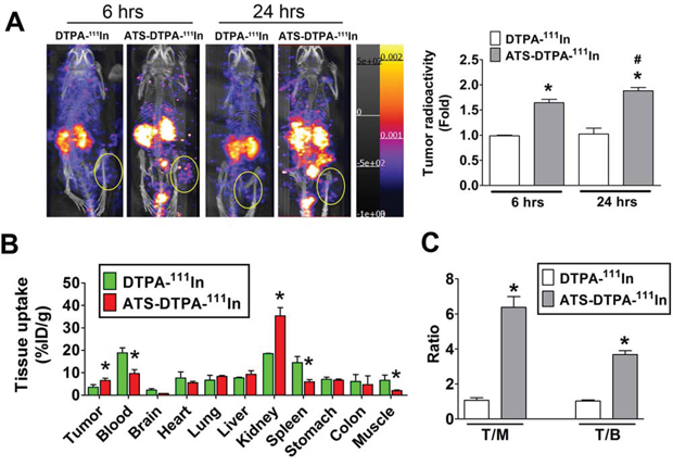 The nuclear imaging agent of ATS-DTPA-111In for CRC tumor detection in vivo.