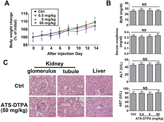 Toxicity evaluation of ATS-DTPA in mice for 14 days.