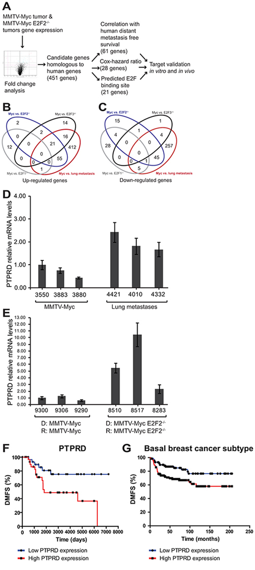 Pipeline for identification of genes regulating E2F2−/− breast cancer metastasis.