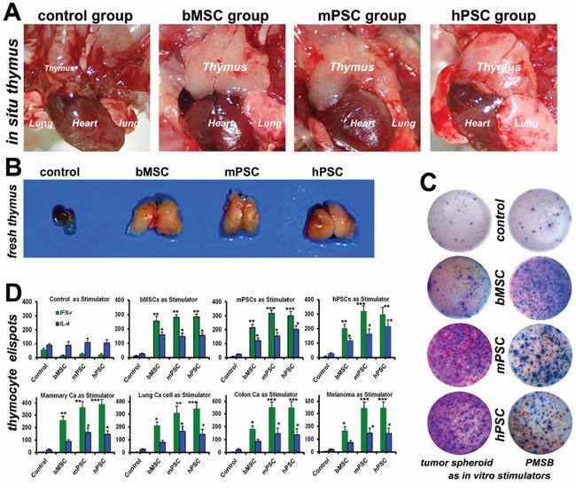 PMSB drives endogenous thymic renewal.