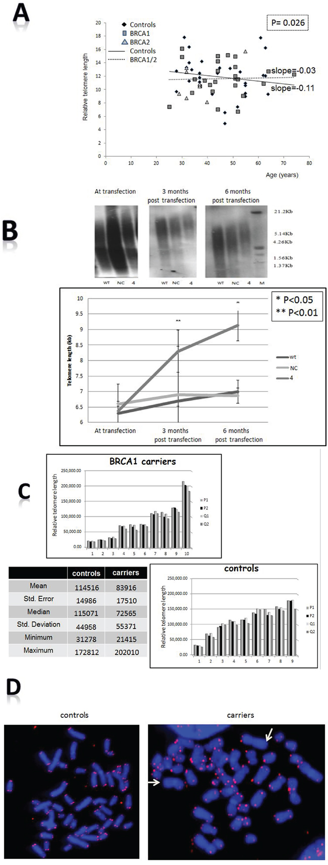 Effects of BRCA mutation on telomere length characteristics.