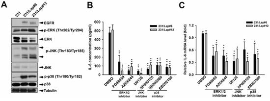 Lapatinib induced IL-6 expression through MAPK signaling pathways.