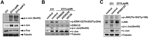 c-Jun activation is involved in lapatinib-induced IL-6 production.