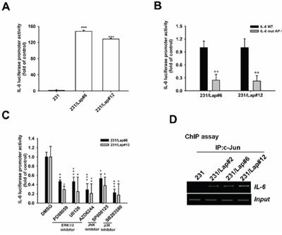 MAPK/AP-1 axis mediates lapatinib-induced IL-6 gene transcription.