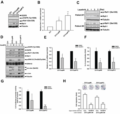Raf-1 activation mediates IL-6 gene expression in 231/Lap cells.