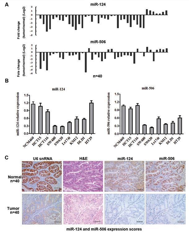 MiR-124 and miR-506 expression levels are frequently downregulated in human CRC.
