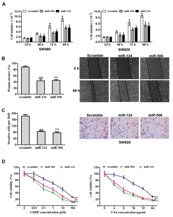 Overexpression of miR-124 or miR-50b inhibits tumor cell progression and increases sensitivity to chemotherapeutics in vitro.