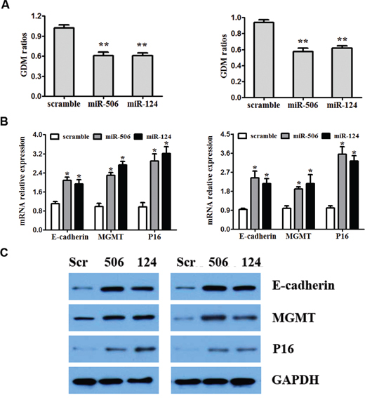 Overexpression of miR-124 and miR-506 reduces global DNA methylation and restores the expression of E-cadherin, MGMT and P16.