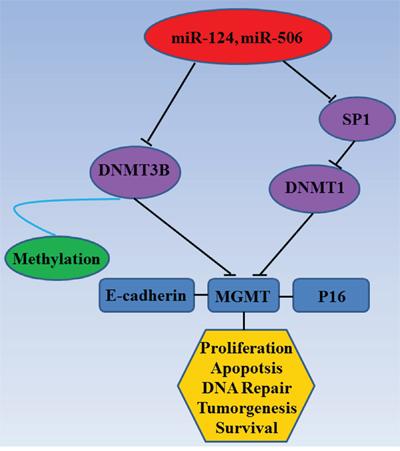 Mechanism diagram.