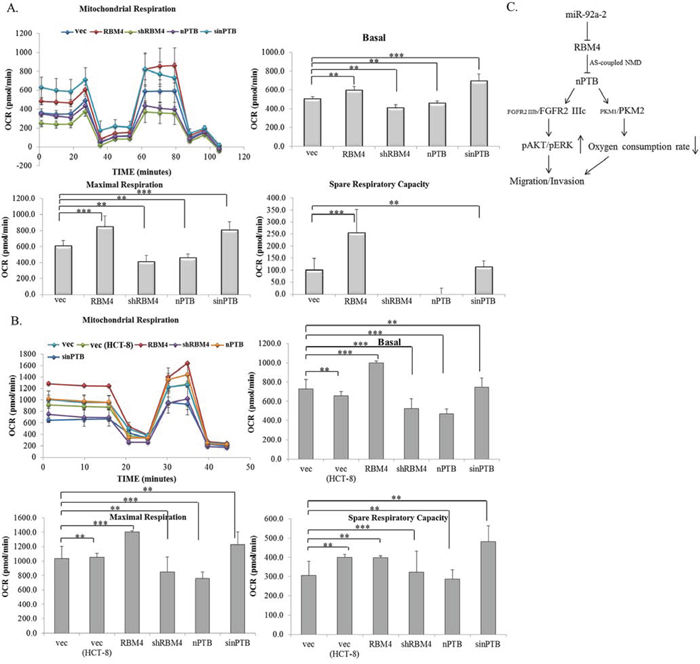 Expression profiles of RNA-binding motif 4 [RBM4] and neuronal polypyrimidine tract-binding protein [nPTB] modulate the mitochondrial activity of colorectal cancer [CRC] cells.