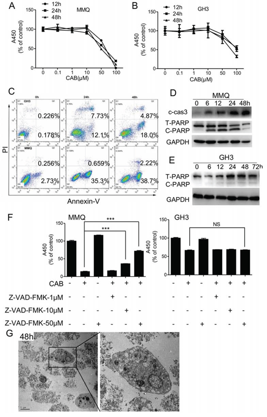 CAB induces both apoptosis and non-apoptosis cell death.