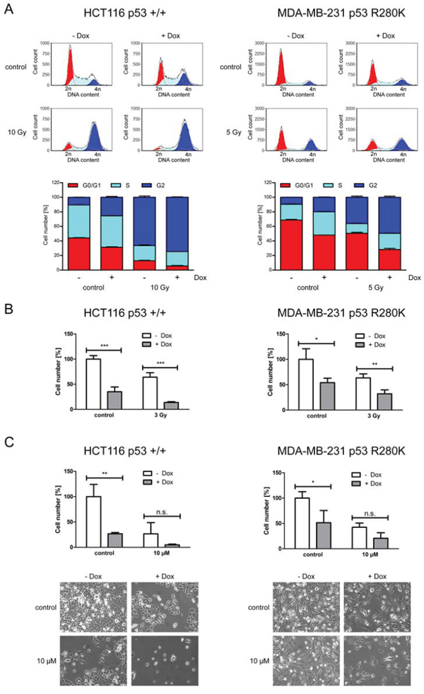 ERp57 triggers proliferation and cell cycle progression of cancer cells independently of p53.