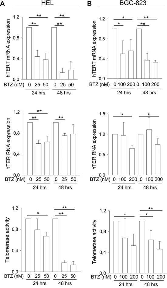 The inhibitory effect of bortezomib on hTERT and hTER expression and telomerase activity in leukemic and gastric cancer cells.