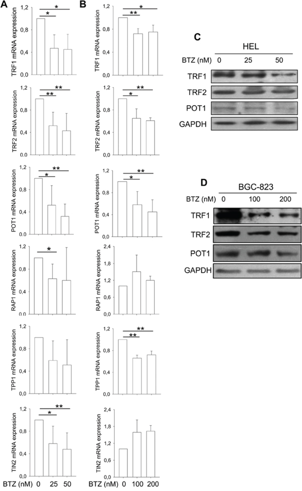 Widespread dysregulation of shelterin protein expression in bortezomib-treated HEL and BGC-823 cells.