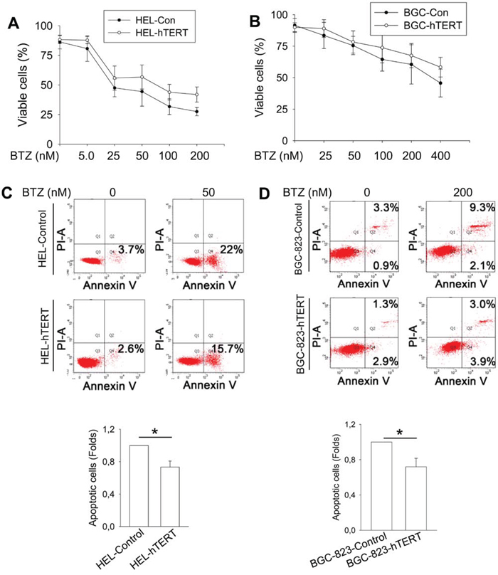 Attenuation of bortezomib-induced apoptosis by hTERT over-expression in HEL and BGC-823 cells.