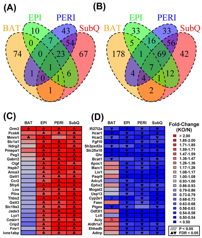 Shared or partially shared BAT/WAT expression changes in GHRKO mice as compared to normal controls.