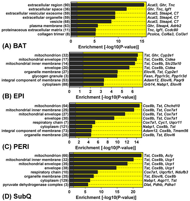 Genes with GHRKO-decreased expression in WAT (but not BAT) are associated with mitochondria and the mitochondrion inner envelope.