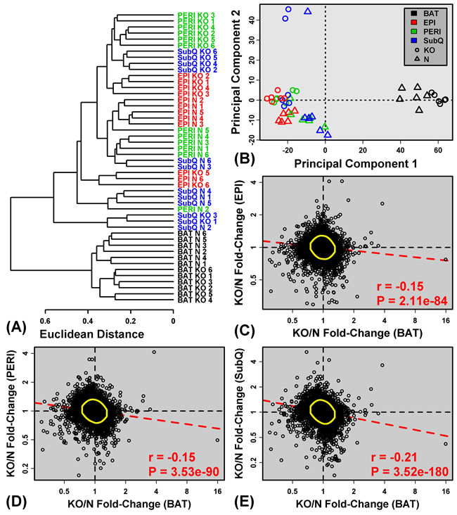 BAT shows distinct expression patterns and divergent expression shifts in GHRKO as compared to normal mice.