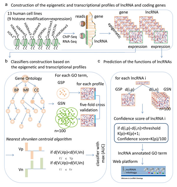 Workflow for predicting the functions of lncRNAs based on chromatin and expression patterns.