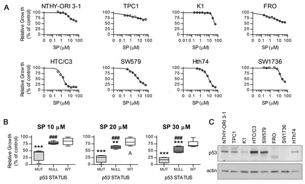 Antiproliferative effect of SP on distinct thyroid cancer cell lines with different