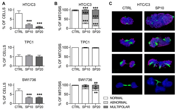 SP induces mitotic alterations in sensible cells.