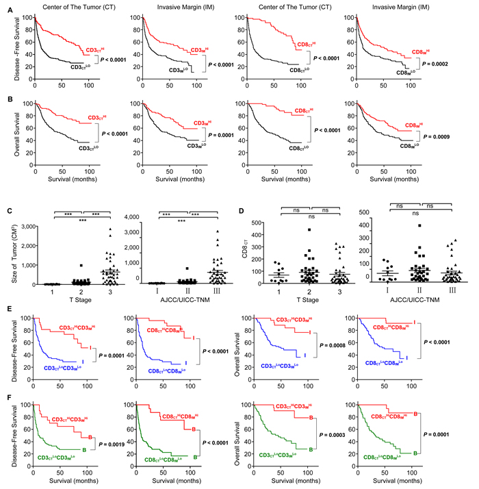 Increased survival time for the patients with high densities of CD3
