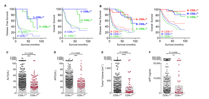 CD8CT directly predicts survival and associates with clinical characteristics of HCC.