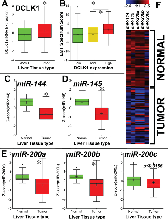 DCLK1 mRNA is overexpressed and tumor suppressor miRNAs are downregulated in TCGA's Liver Hepatocellular Carcinoma (LIHC) RNA-seq dataset.