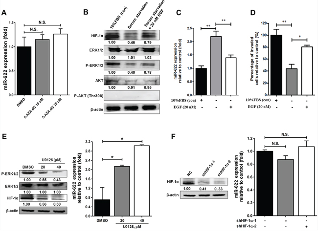 Effects of the EGF-ERK signaling pathway on the regulation of miR-622 expression in relation to invasiveness of lung cancer.
