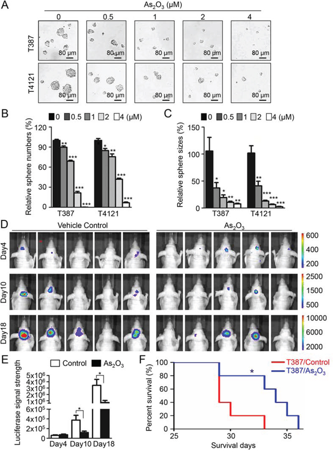 As2O3 treatment effectively inhibited GSC tumorsphere formation and tumor growth and significantly increased survival of mice bearing GSC-derived xenografts.