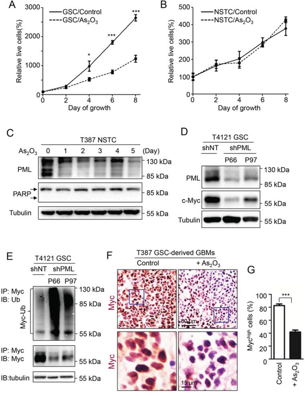 c-Myc is the downstream effector of PML in GSCs that associates with the GSC-preferential effects of As2O3 .