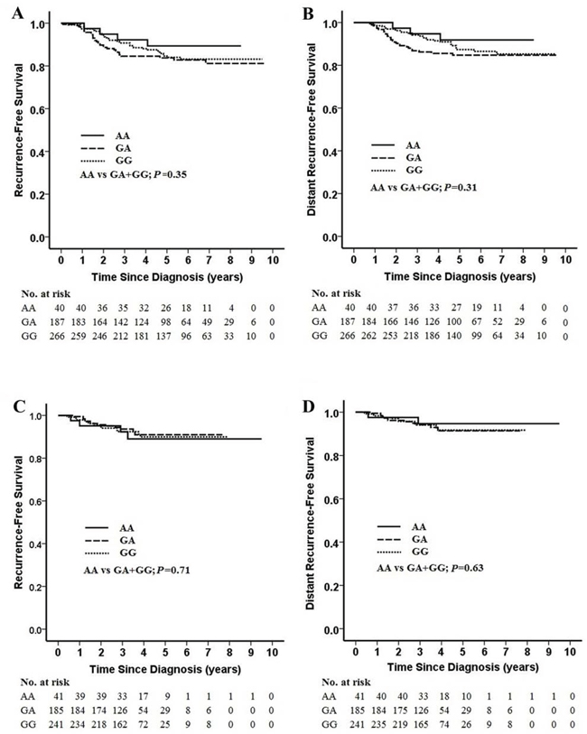 Kaplan-Meier estimates of recurrence-free survival (RFS) and distant recurrence-free survival (DRFS) by rs1799937 genotype and neoadjuvant chemotherapy regimen.