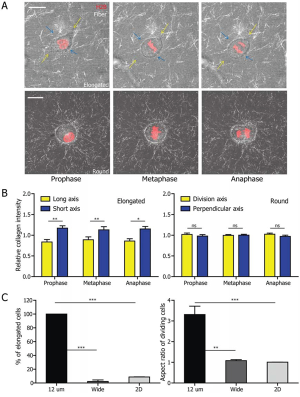 Elongated cell-division mode is associated with 3D matrix confinement and can be recapitulated in microfabricated channels.