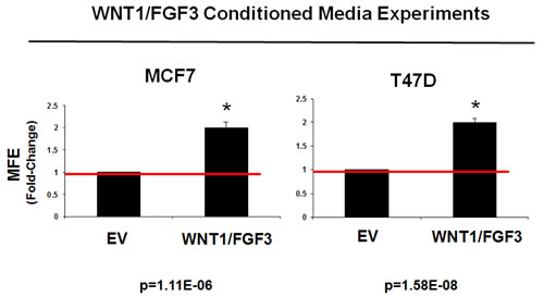 Conditioned media from WNT1/FGF3 expressing MCF7 cells increases mammosphere formation.
