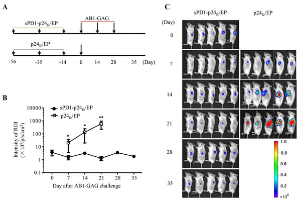 Complete protection of mice against three consecutive lethal challenges of AB1-GAG mesothelioma.