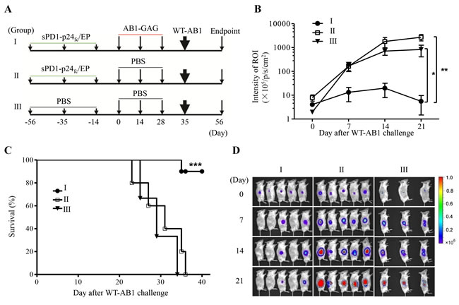 Protection of mice against the lethal challenge of wild-type mesothelioma.
