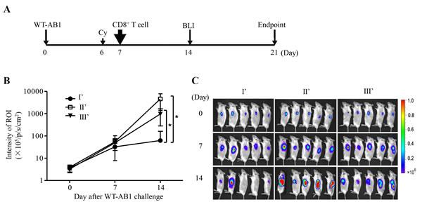 Adoptive transfer of tumor-specific CD8