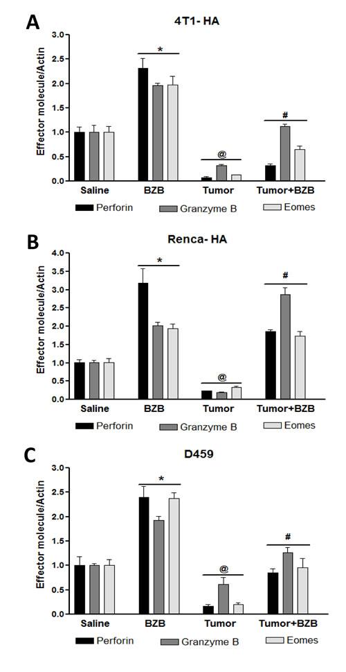 Bortezomib enhances expression of effector molecules in splenocytes of tumor-bearing mice.