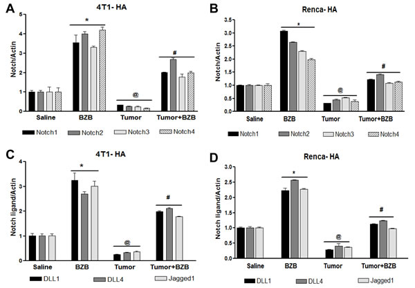 Bortezomib influences Notch system in tumor-bearing mice.