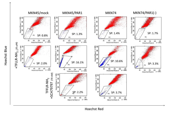 Representative FACS analysis of side population cells in human gastric cancer cell lines.