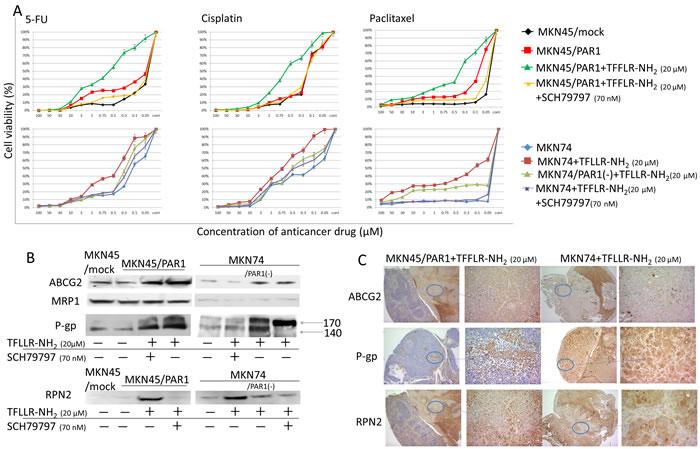 PAR1 activation acquires anti-cancer drug resistance.