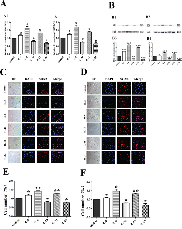 Influence of ILs on the RNA and protein expression of SOX2 in LNCaP and PC-3 cells by RT-PCR, Western blotting and immunofluorescence.