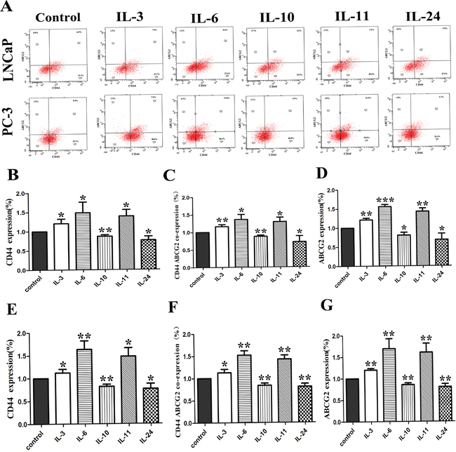 The effect of ILs on the expression of CD44 and ABCG2.