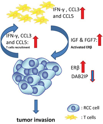 Schematic presentation of the interaction mechanisms of T cells with RCC cells in the tumor microenvironment.