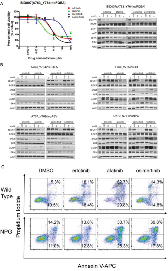 Efficacy of EGFR-TKIs for EGFR exon 20 insertion mutations.