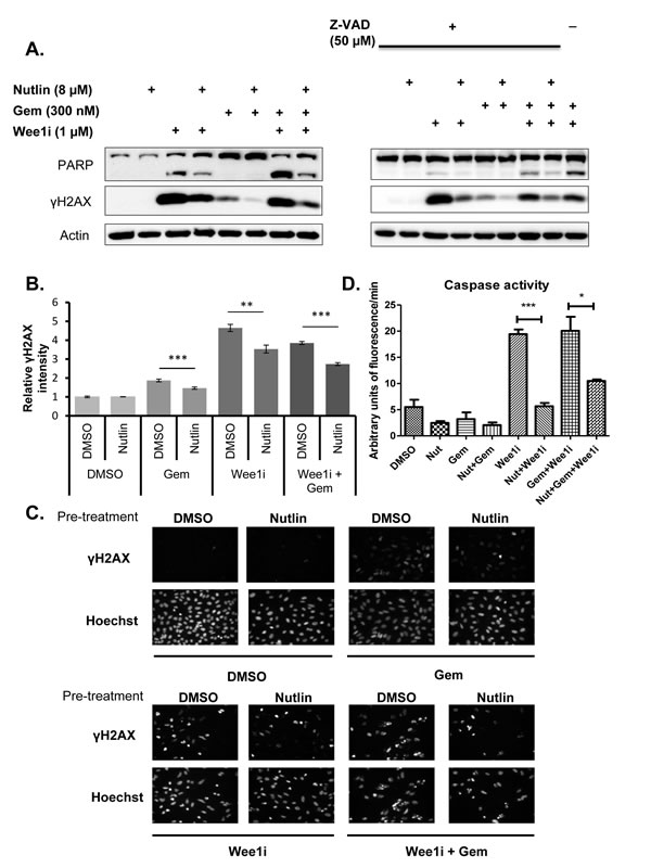 Nutlin prevents caspase activation and γH2AX accumulation in response to Wee1 inhibitor and/or gemcitabine.