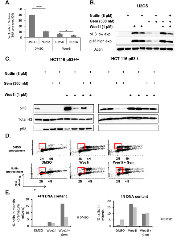 p53 prevents accumulation of cells in premature mitosis.