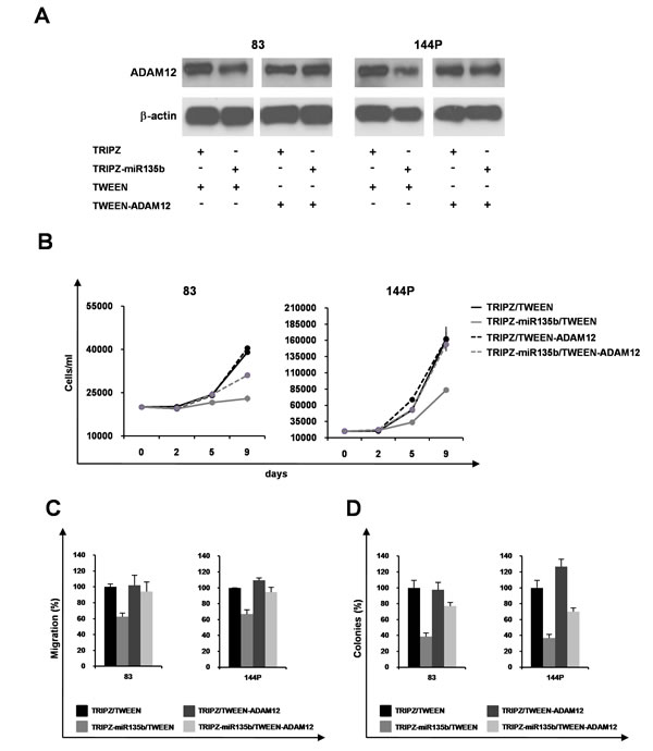ADAM12 re-expression in GSCs partly induces phenotypic rescue.