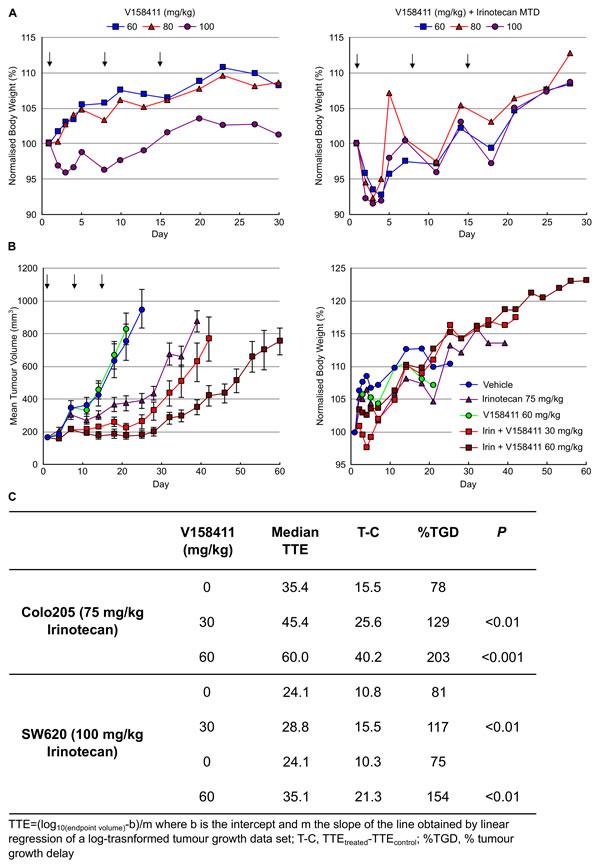 V158411 potentiates irinotecan cytotoxicity in human tumor xenografts.