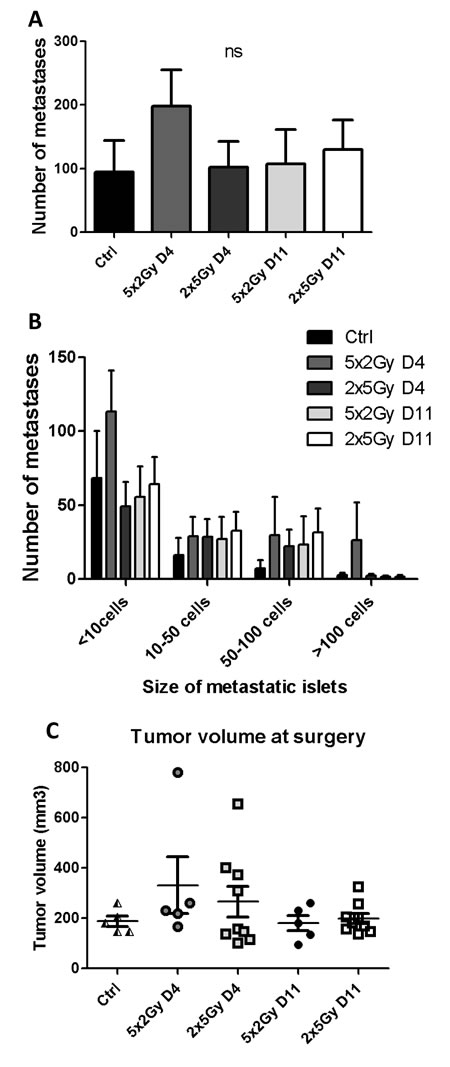 Impact of neoRT and ST timing on lung metastases in NOD/SCID mice.